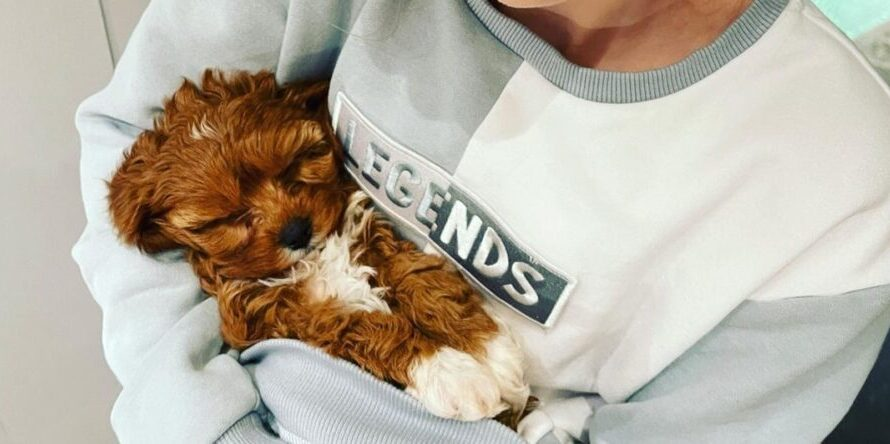 Norris Nuts dog died – what happened